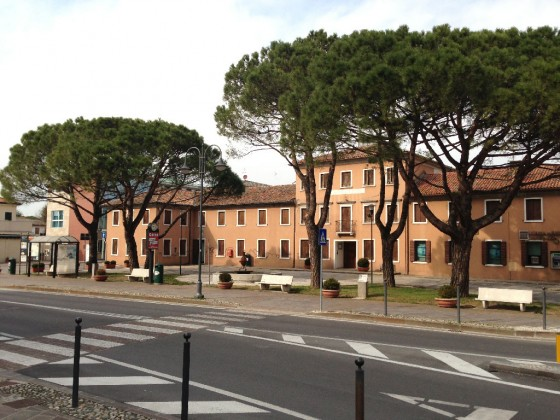 Foto pini domestici piazza San Michele